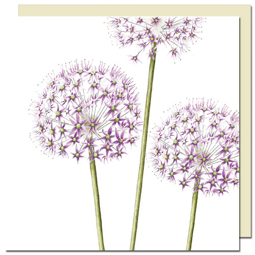 cards-allium