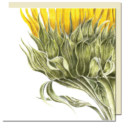 cards-sunflower