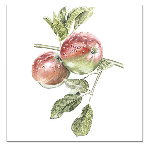 prints-apple