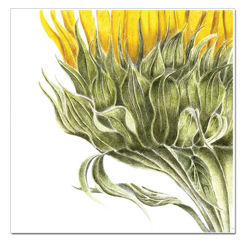 prints-sunflower
